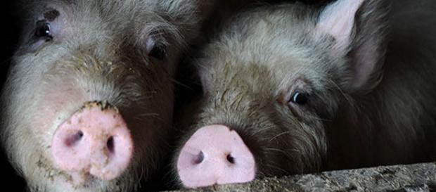 Wild Island: Jungen Schweine werden getötet!