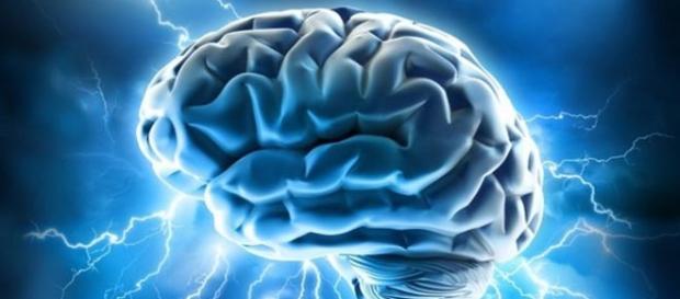 Study says brains have no gender.