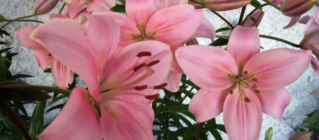 La belleza y la naturaleza en flor
