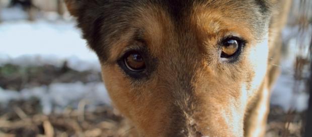 Cinquenta e seis cães foram dados como mortos.