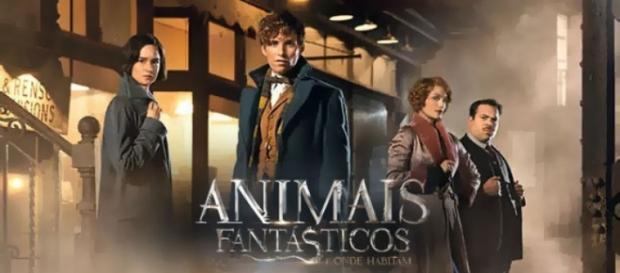 """""""Animais Fantásticos e Onde Habitam"""""""