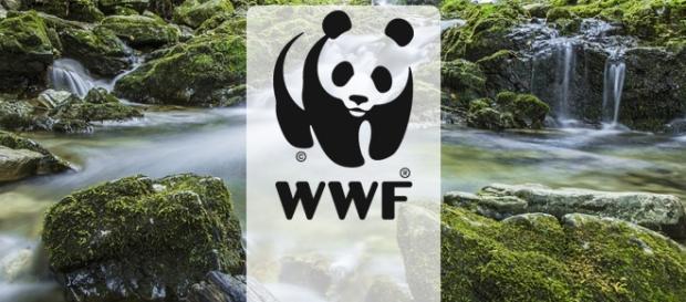 WWF está com vagas abertas em diversos países