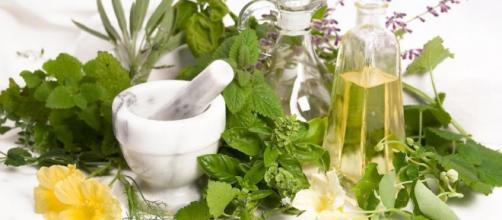 hierbas naturales para bajar de peso