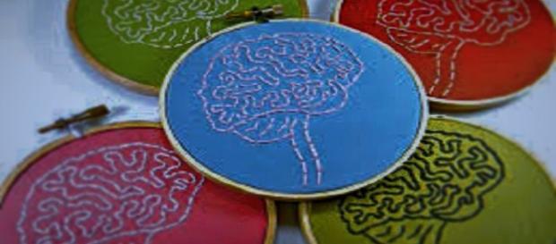 El cerebro: El órgano más importante del cuerpo.