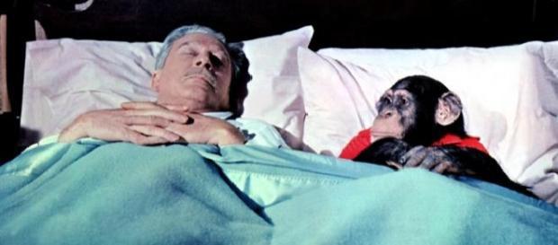 El hombre duerme menos pero mejor que los monos