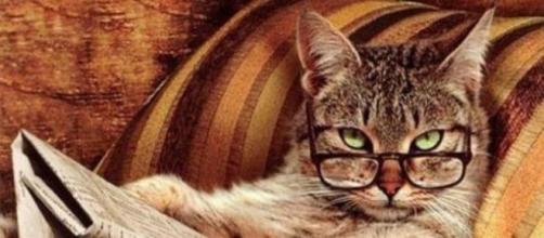 Gatto con gli occhiali con giornale