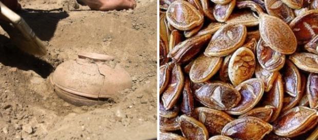 Sementes de abóboras de 800 anos puderam germinar
