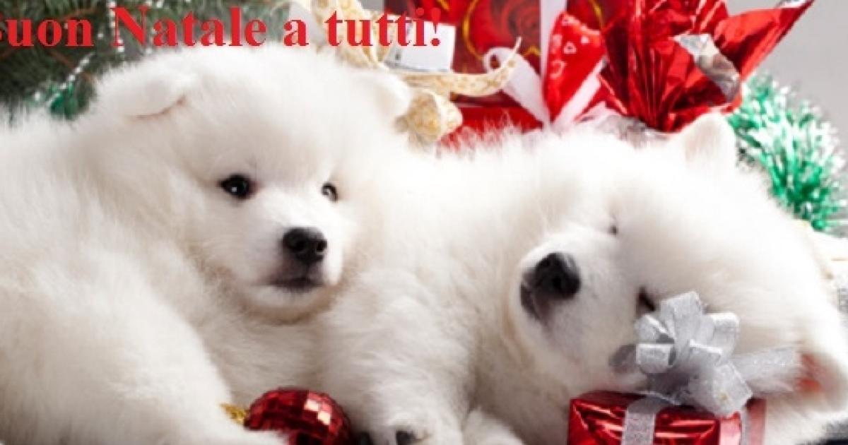 Frasi Per Auguri Di Natale Divertenti.Auguri Di Natale Le Espressioni Piu Divertenti E Simpatiche Da Inviare Su Facebook O Wa