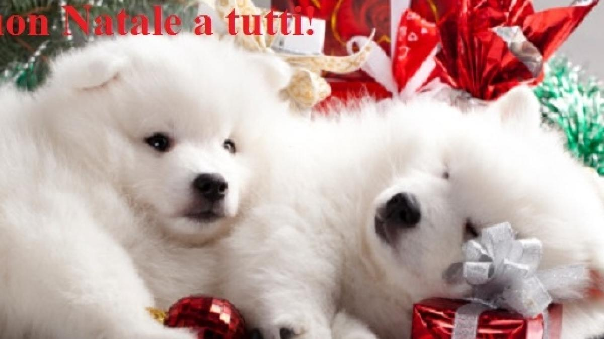 Immagini Natalizie Simpatiche.Auguri Di Natale Le Espressioni Piu Divertenti E Simpatiche Da Inviare Su Facebook O Wa