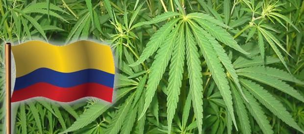 Colômbia regulamenta a produção de maconha