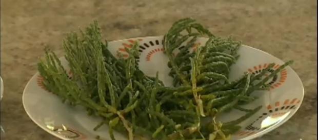 Sal vegetal traz bons benefícios para saude