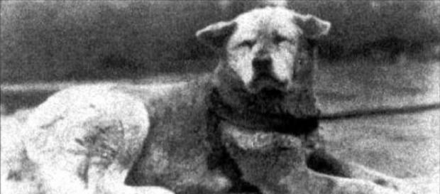 Hachiko, cainele care a murit aşteptând stăpânul