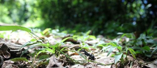 PACMA quiere modificar la Ley de Bosques.FOTO:JEXA