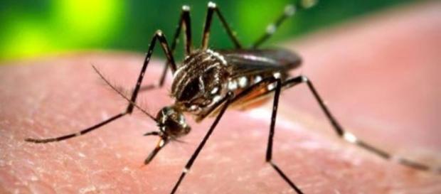 A dengue matou 839 pessoas no Brasil até novembro