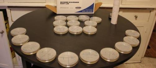 What happens in a petri dish stays in a petri dish