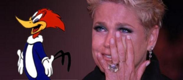 Depois de vencer Xuxa, Pica-Pau 'é demitido'