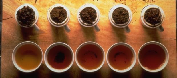 Distintos tipos de té y sus propiedades