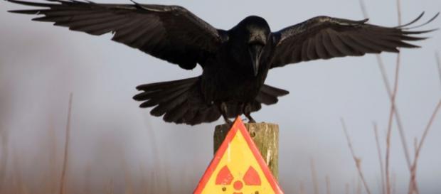 O desastre de Chernobyl criou animais radioativos