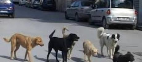 Un gruppo di randagi ha aggredito un uomo a Ragusa