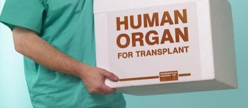 Arrestato trafficante di organi umani
