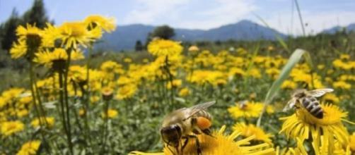 La producción mundial de miel está en riesgo