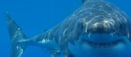 Peligro por tiburones asesinos en Australia