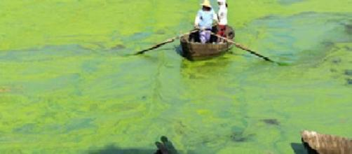 Poluição por eutrofização