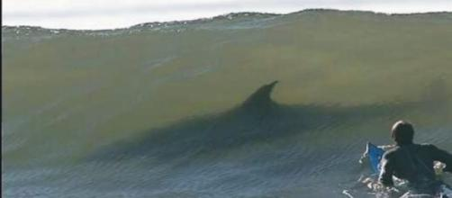 Tiburón asesino en Australia