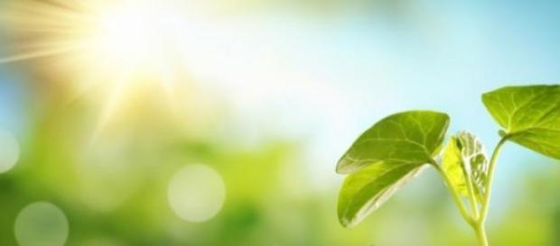 Criação de folhas para a produção de combustível