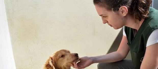 Mais de 30 cães aguardam para ser adotados