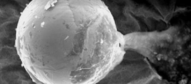 Fotografía de la posible semilla extraterrestre.