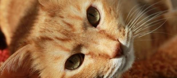 Hoje é o dia mundial do gato