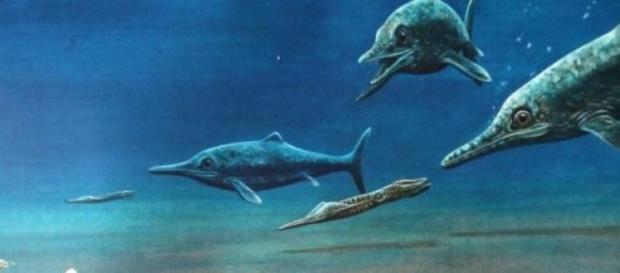 Correspondería a una nueva especie de ictiosaurio