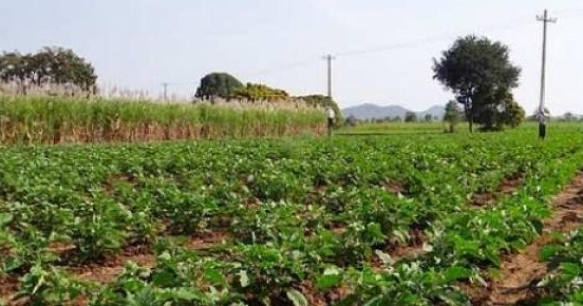 Calcolo IMU 2020 Terreni Agricoli - TuttoIMU