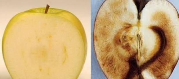 El proceso de pardeamiento de la manzana