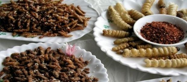 Muesta culinaria mesoamericana: insectos