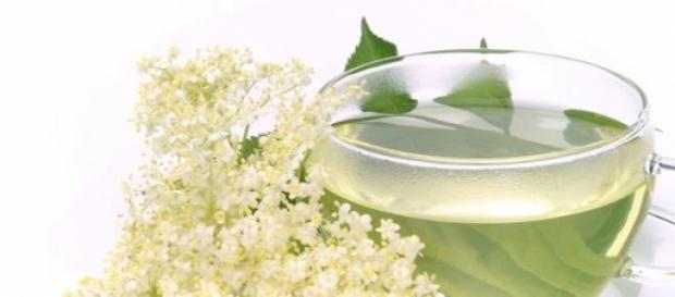 Indicatiile si contraindicatiile ceaiului de soc