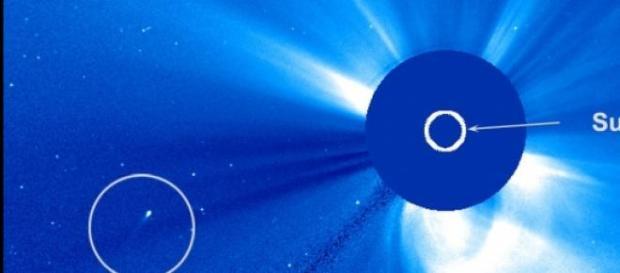 Se trata de un raro cometa resistente y solitario