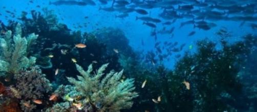 El agua de mar, una fuente de salud. Es gratis.