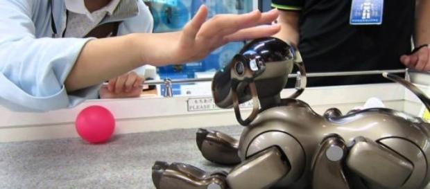 Los japoneses respetan y protegen a estos robots