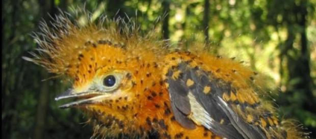Es un asombroso camuflaje natural en el Amazonas