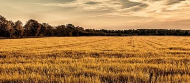 Richiesta rimborso IMU terreni agricoli