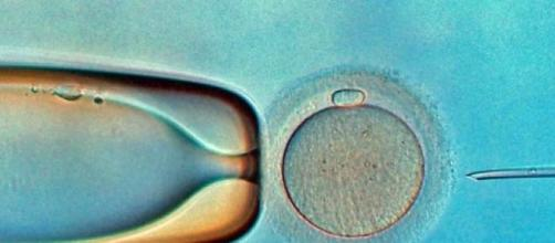 In vitro fertilisation (Flickr)