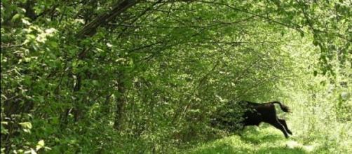 Bison hiding in Białowieża Forest (via Wikipedia)