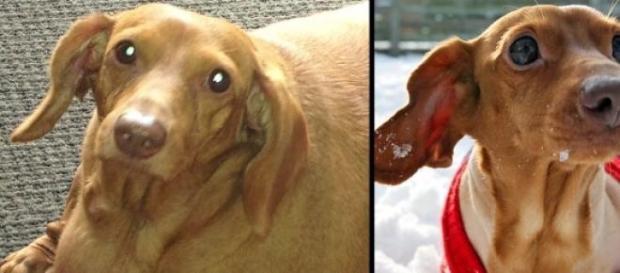 O antes e depois mais amoroso de sempre