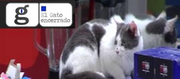 ¿Gato real o gato figurado?