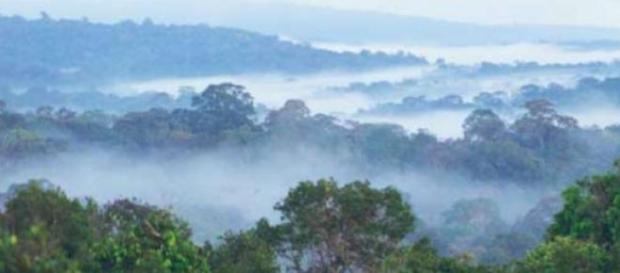 Los humanos primitivos se adaptaron a las selvas