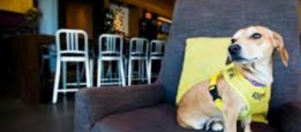 """Os cães usam a frase """"adota-me"""""""