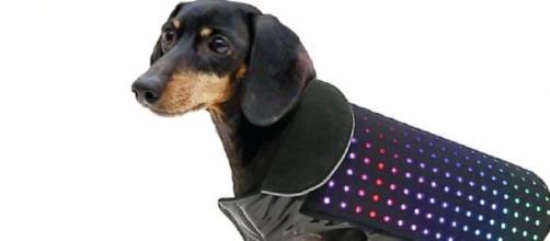 O Disco Dog promete ajudar o seu cão a brilhar