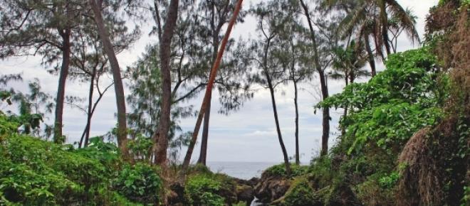 Vanuatu : a stream on the Island of Efate